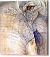 My Tiny Eye - Asian Tusker Canvas Print