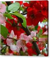 My Two Quince Worth Canvas Print