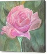 My Wild Irish Rose Canvas Print