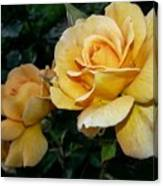 My Yellow Rose Canvas Print