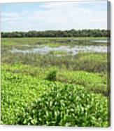 Myakka River And Marshes Canvas Print