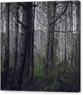 Myakka Woods Canvas Print
