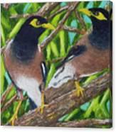 Mynah Birds #474 Canvas Print