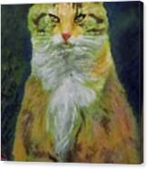 Mysterious Cat Canvas Print