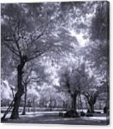 Mysterious Park Canvas Print