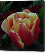 Mysterious Tulip Canvas Print