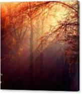 Mystic Forest At Dawn L A Canvas Print