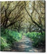 Mystical Angel Oaks  Canvas Print