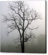 Mysty Tree 3 Canvas Print