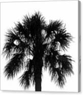 Naked Palm Canvas Print