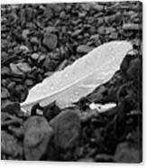 Nameless Feather 2 Canvas Print