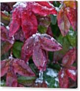 Nandina Winter Ice Canvas Print