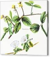 Nanea And Hunakai Canvas Print