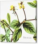 Nanea Flower Art Canvas Print