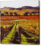 Napa Carneros Vineyard Autumn Color Canvas Print