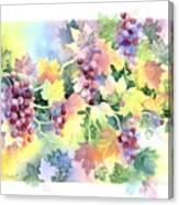 Napa Valley Morning Canvas Print