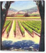 Napa Wine Vineyard Summer Canvas Print