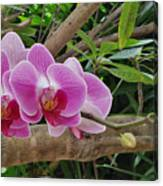 Naples Orchid 1 Canvas Print