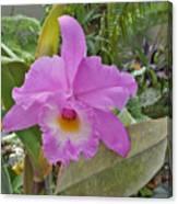 Naples Orchid 3 Canvas Print