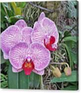 Naples Orchid 4 Canvas Print