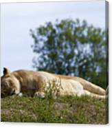 Nappy Time Canvas Print