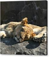 Naptime For The Twins Canvas Print