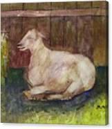 Naptime On The Farm Canvas Print