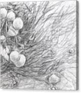 Naranjas En Nocaima Canvas Print