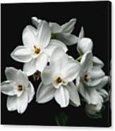 Narcissus The Breath Of Spring Canvas Print