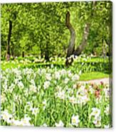 Narcissus In Apple Garden Canvas Print