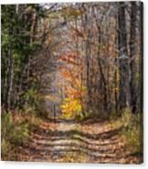 Narrow Road Canvas Print