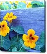 Nasturtium Box Canvas Print