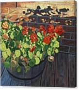 Nasturtiums In Late Light Canvas Print