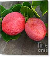 Natal Plums On Branch Canvas Print