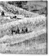 National Bison Range Wildlife Refuge Mt Usa Canvas Print
