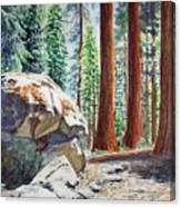 National Park Sequoia Canvas Print