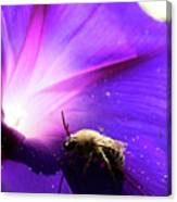 Native Bee On A Purple Flower Canvas Print