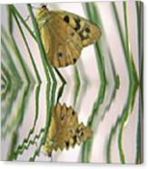 Native Tasmanian Butterfliy. Canvas Print