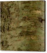 Native Tree Canvas Print