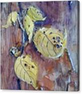 Native Yellow  Canvas Print