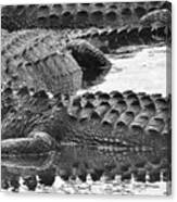 Gator 2 18 Canvas Print