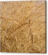 Natural Abstracts - Elaborate Shapes And Patterns In The Golden Grass Canvas Print