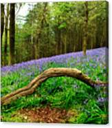 Natural Arch And Bluebells Canvas Print
