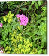 Natural Background With Vegetation And Purple Flowers. Canvas Print