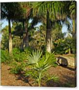 Natural Beauty Of Florida Canvas Print
