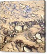 Natural Dishevelment On The Beach, Ireland Canvas Print