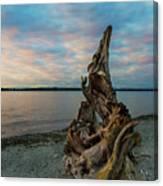 Natural Driftwood At Birch Bay State Park Canvas Print