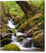 Natural Flow Canvas Print