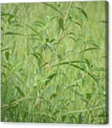 Natural Green Screen Canvas Print