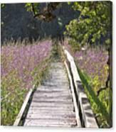 Natural Healing Canvas Print